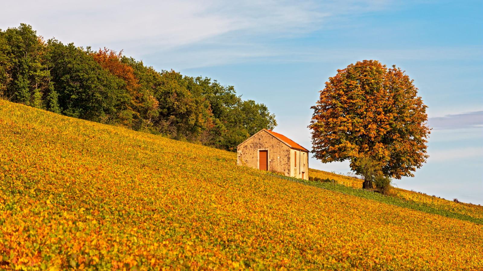 Vignobles Côte de Beaune