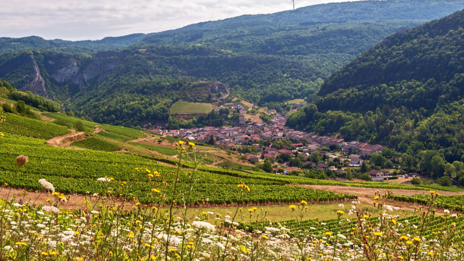 Vignoble et campagne des Montagnes du Jura
