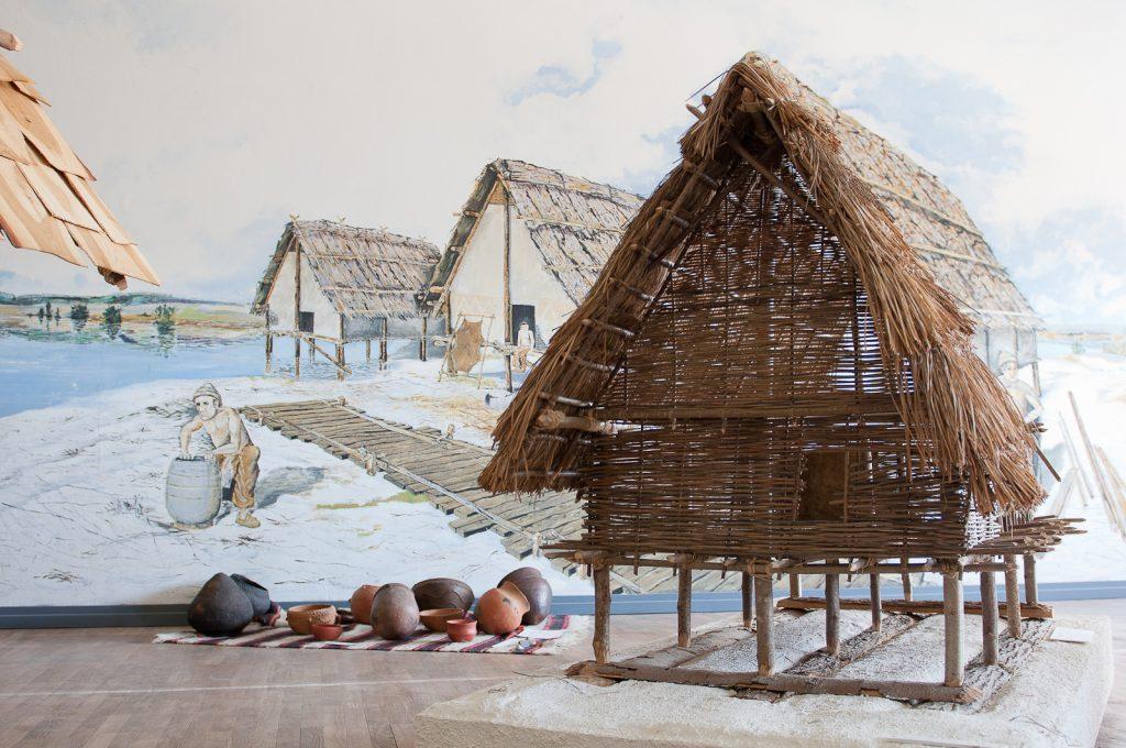 Reconstitution des premières populations à Clairvaux-les-lacs