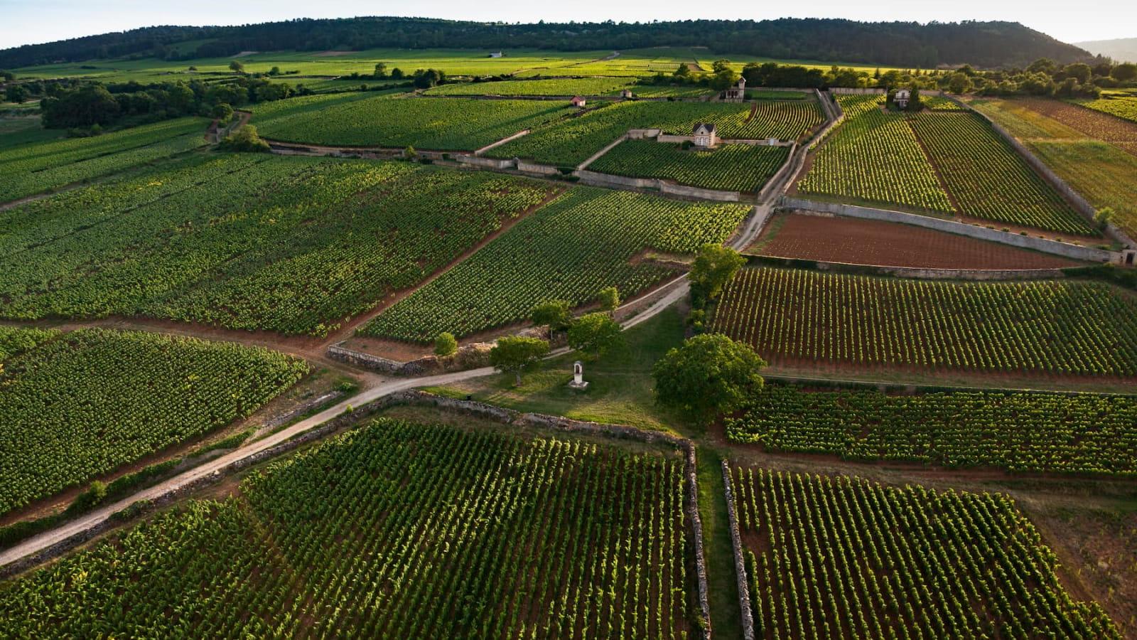 Les Climages du vignoble de Bourgogne - Meursault
