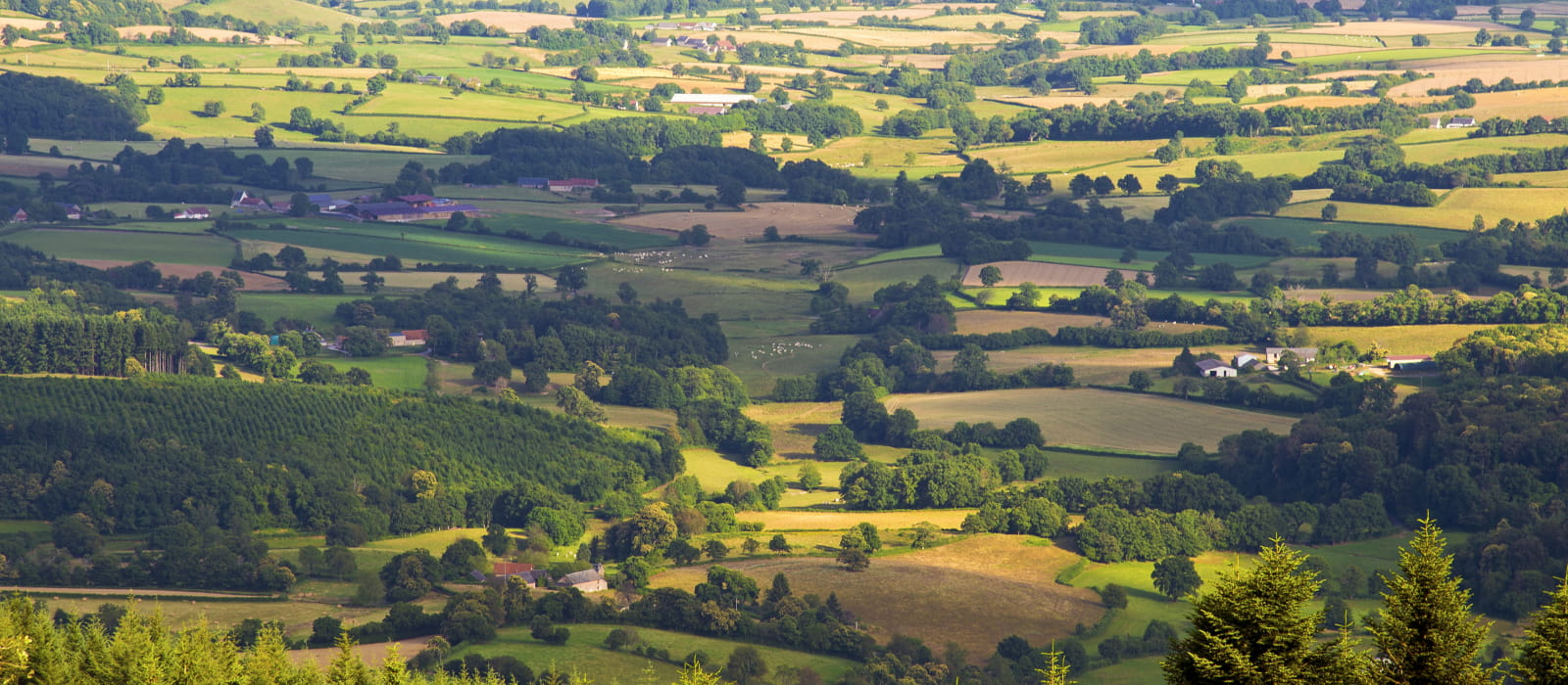 Vue de Bibracte depuis le Mont Beuvray